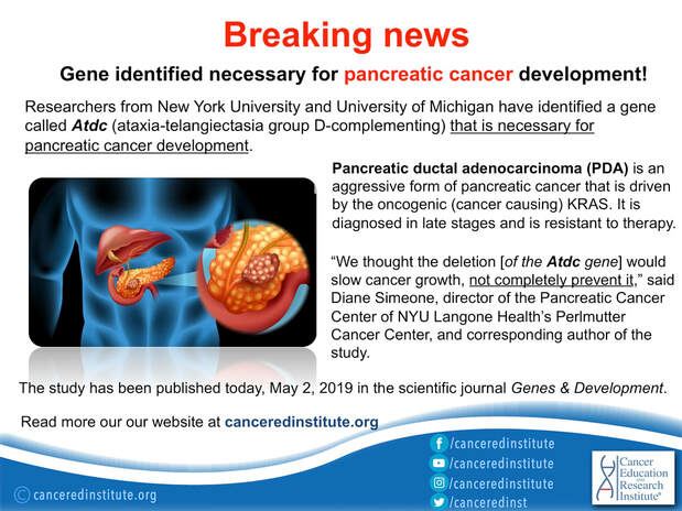 BREAKING NEWS-Gene identified necessary for pancreatic cancer development - Cancer Education and Research Institute (CERI)